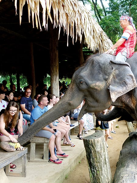 RIDE, RAFT, and RELAX at Maetaman's Elephant Adventure in